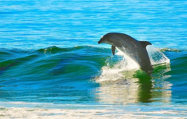 波とイルカ