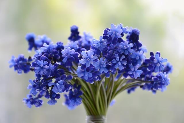 青い小花の花束