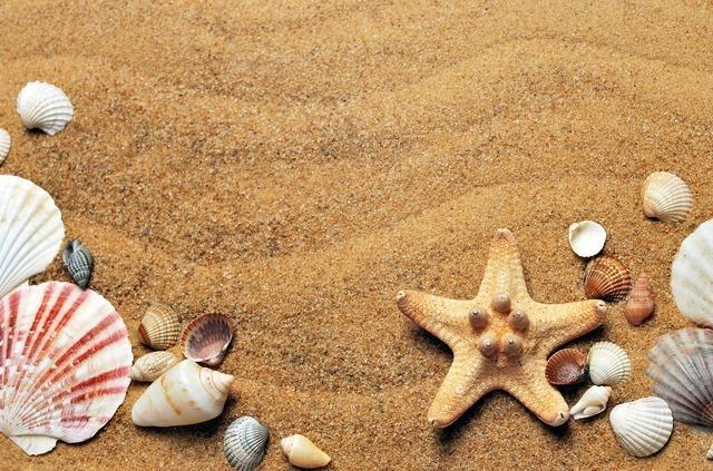 砂と貝殻やヒトデ