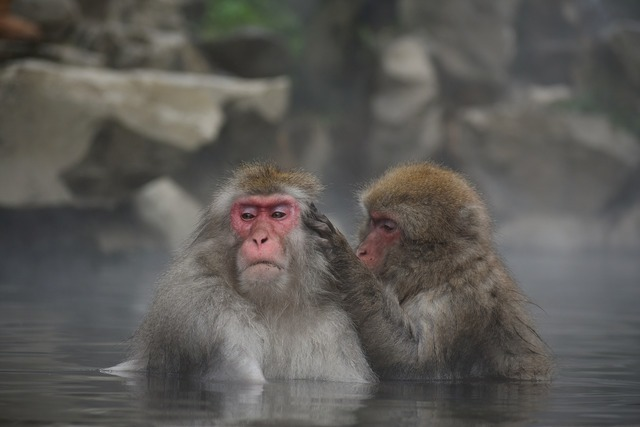 お風呂に入るサル