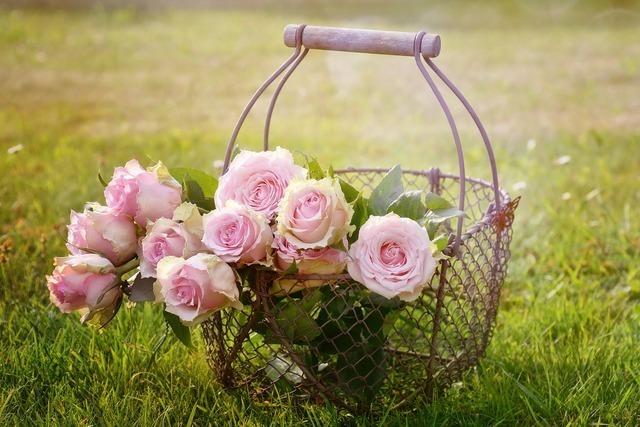 芝生と薔薇