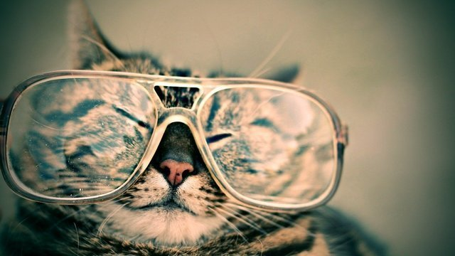 眼鏡をかけた猫