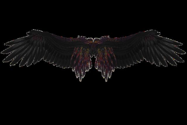 黒い翼画像
