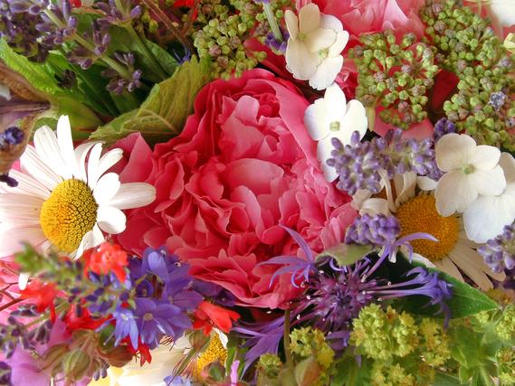 カラフルな花の集まり
