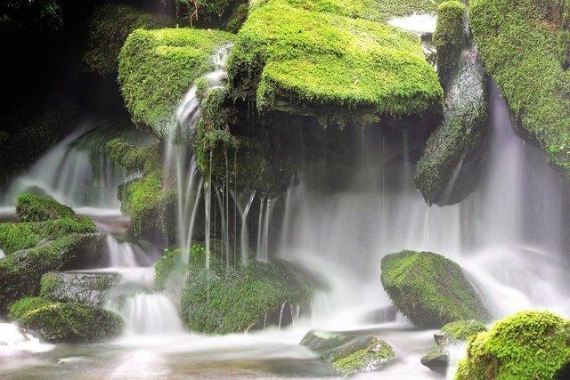 苔の生えた岩場