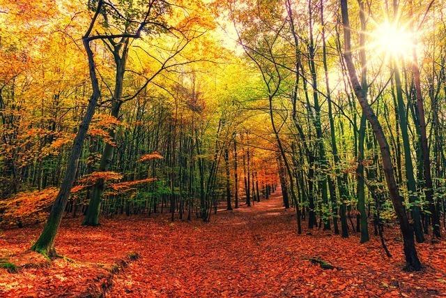 見 を 森 ず を て 見 意味 木