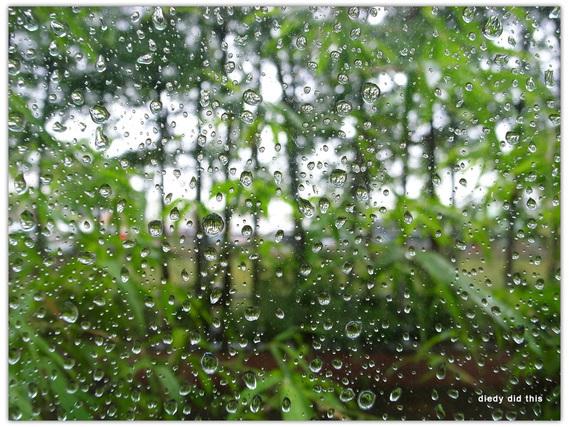 春に降る雨