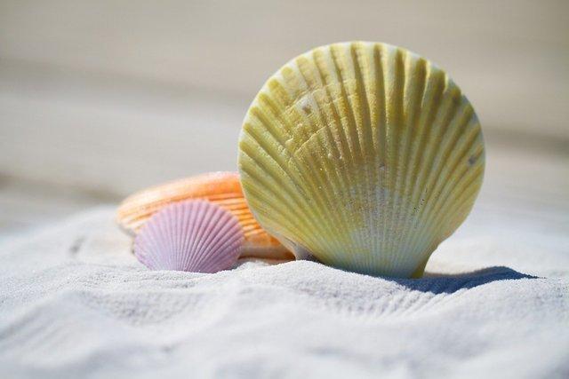 砂浜にある貝殻