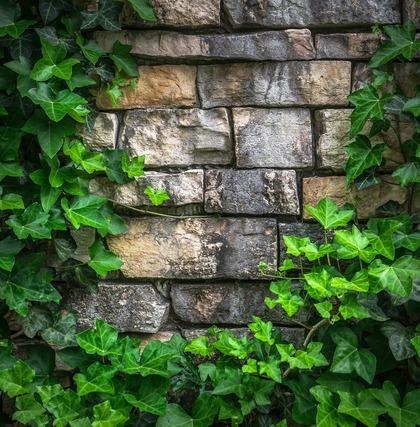 石の壁と蔦