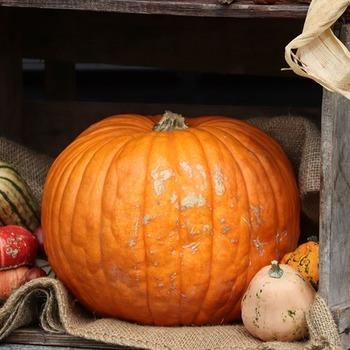 Large thumb halloween 52e5d5424d 1280