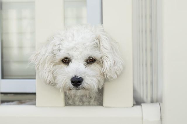 ケージに入った犬