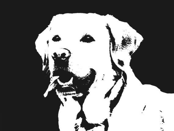 モノクロの犬