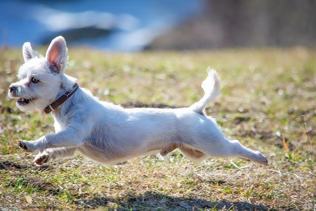 外を走る犬