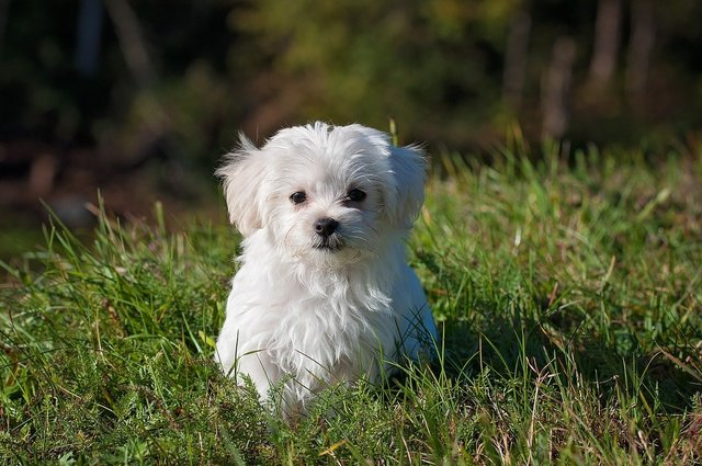 草むらの中に犬