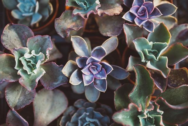 多肉植物の葉