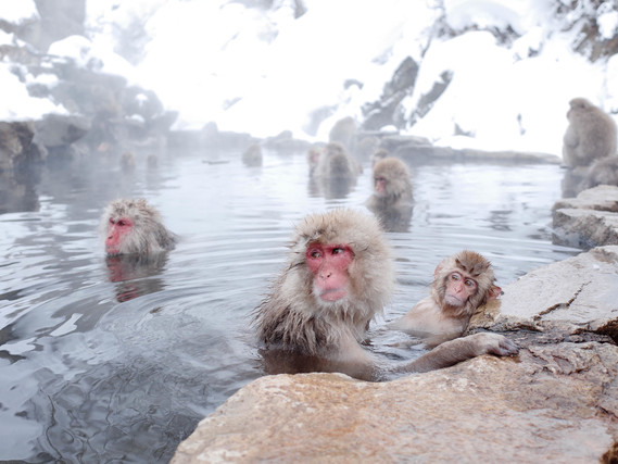 温泉とサル