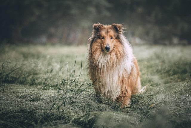 毛が長い犬