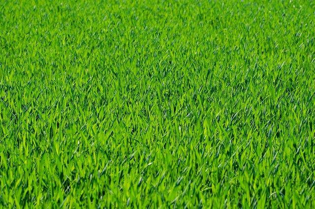 緑が綺麗な芝生