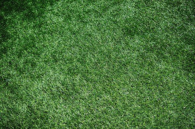 草の短い芝生