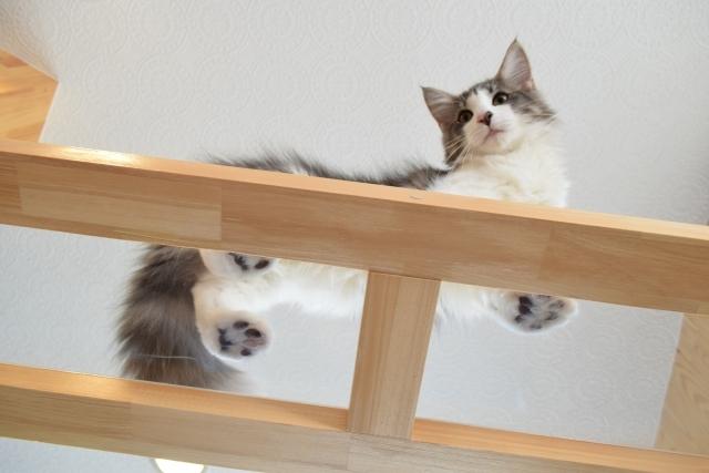 透明のアクリル板の上を歩く猫