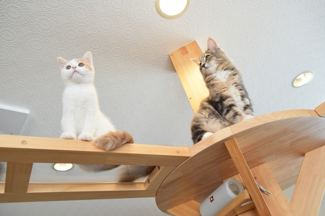 猫の足元に取り付けられた透明のアクリル板