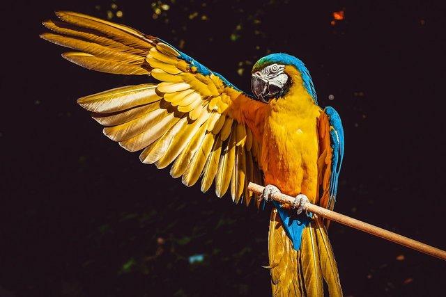 羽を広げる鳥
