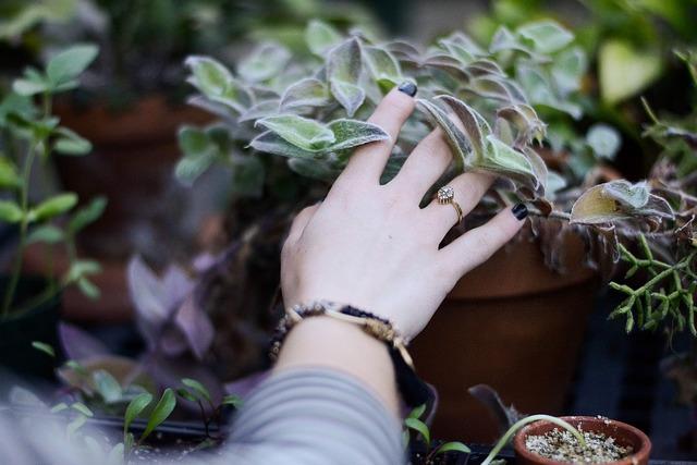 植物を触る様子