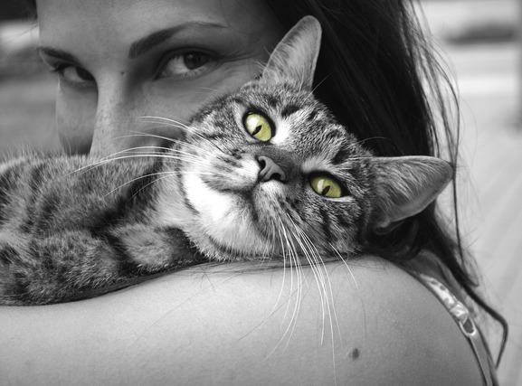 飼われている猫