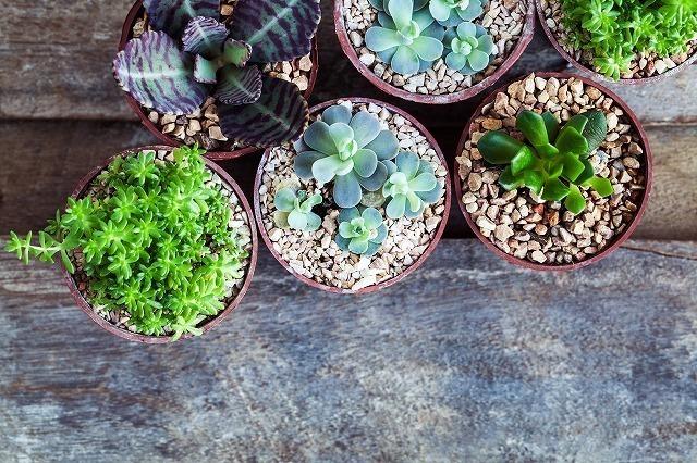 観葉植物のポット