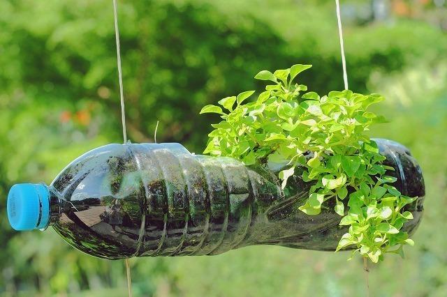 ペットボトルに入った植物