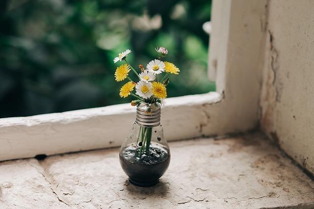 白と黄色のお花