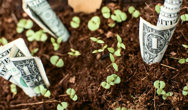 お金の生える土
