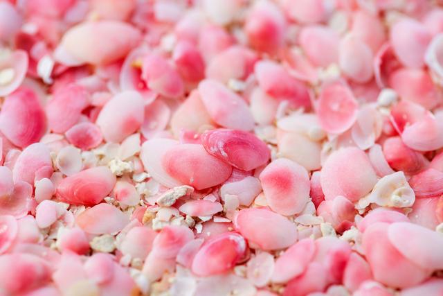 ピンクの貝殻