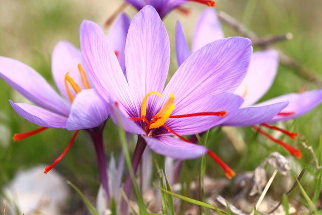 月 花 4 誕生 21 日 4月21日の誕生花(おすすめ名言や花言葉)何の日