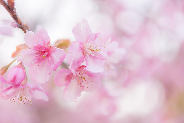 卒園式が行われる春のイメージ画像