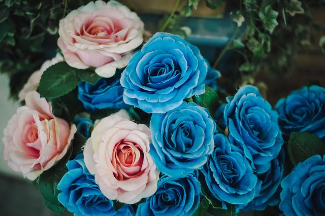 ピンクとブルーの綺麗なお花