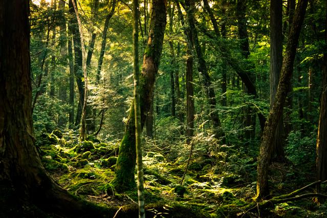森のある風景