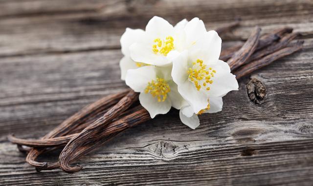 白い花と木の枝