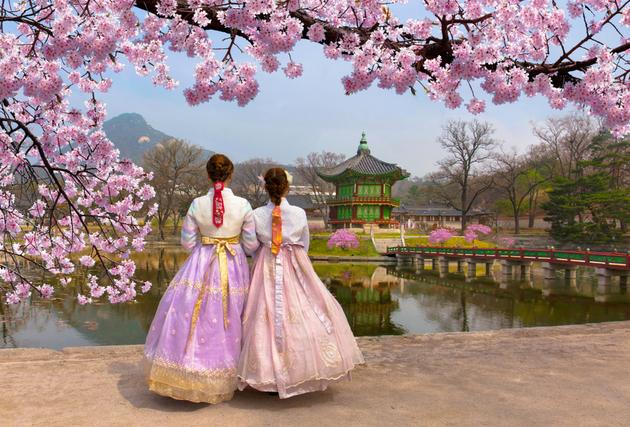 桜の木の下に立つ女性たち