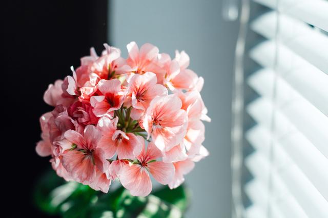 春っぽいイメージ画像