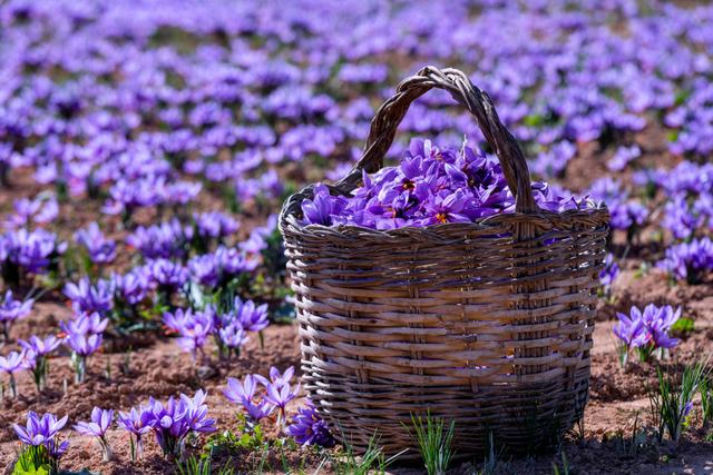 一面紫の花