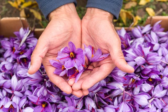 手の平に乗せた花びら